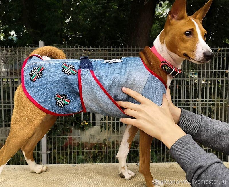 Одежда для питомцев: Куртка джинсовая (попона) для собак, Одежда для собак, Москва, Фото №1