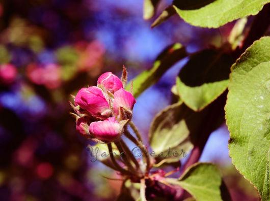 ...если обращать внимание на всякую ерунду, то жизнь может пройти мимо. А потом выяснится, что уже осень и пора засыпать. Не каждая роза переживает зиму. Но каждая роза может сделать лето самым ярким.