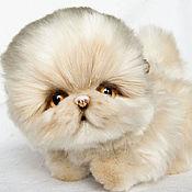 Персидский котёнок. Натюр-тедди.