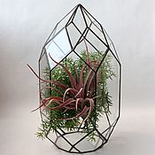 Цветы и флористика handmade. Livemaster - original item The Floriana. Geometric Floriana. Orchidarium. Vase for Floriana. Handmade.