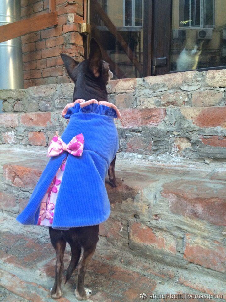 Одежда для питомцев: Попона из вельвета женская, Одежда для собак, Санкт-Петербург, Фото №1