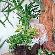 Флорариумы ручной работы. Ярмарка Мастеров - ручная работа Аранжировка из живых растений, флорариум. Handmade.