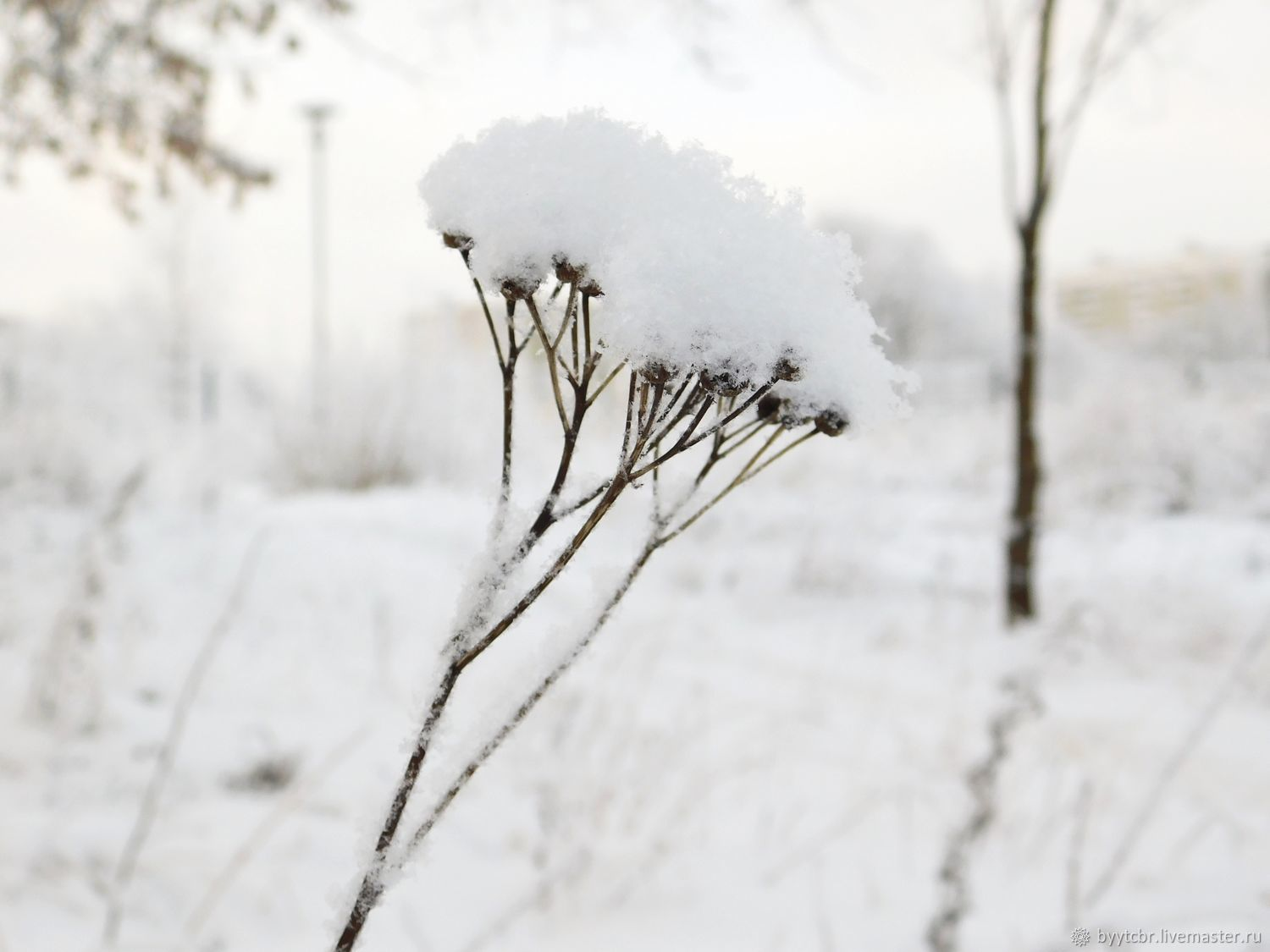 Photo picture SNOW FLUFF, Fine art photographs, Moscow,  Фото №1