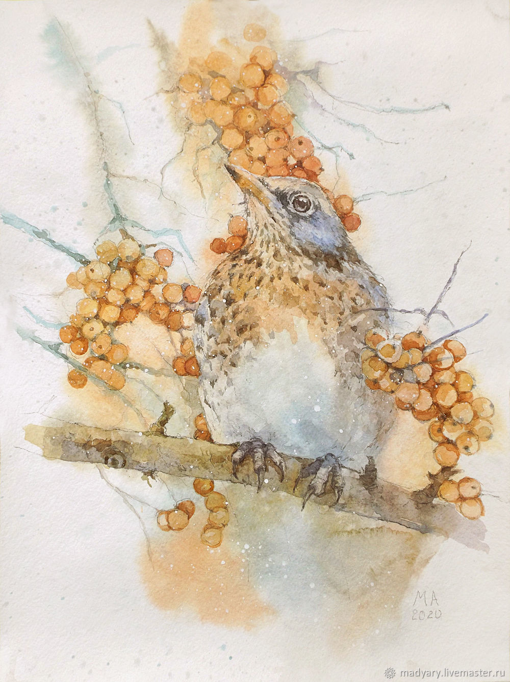 picture of watercolor bird with orange berries (white, grey), Pictures, Smolensk,  Фото №1