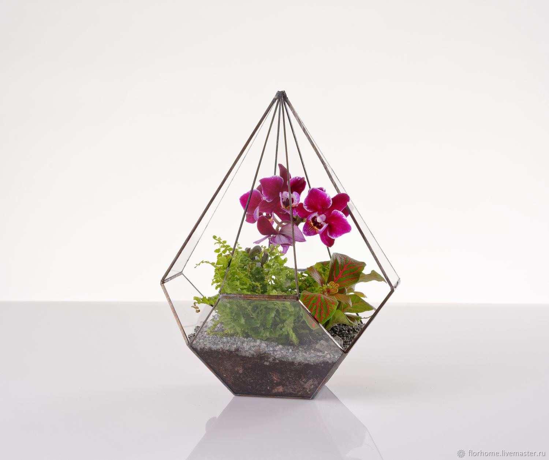 Флорариум конус с орхидеей, Флорариумы, Москва,  Фото №1