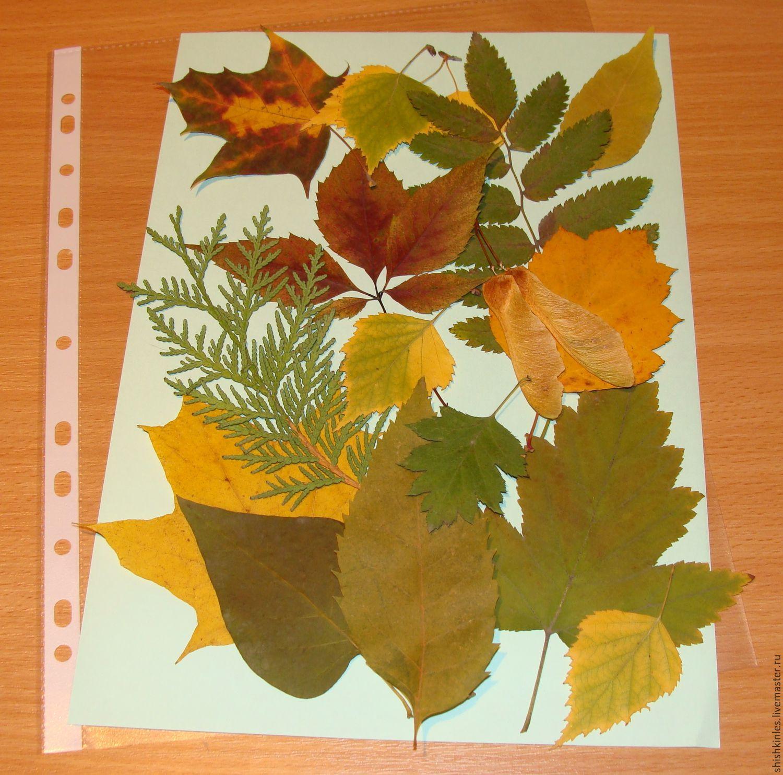 Поделки из листьев и из гербария