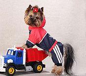 """Для домашних животных, ручной работы. Ярмарка Мастеров - ручная работа Одежда для собак """"Физкульт Привет"""". Handmade."""