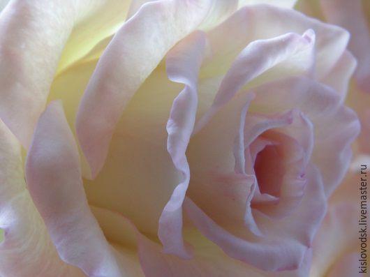 Букеты ручной работы. Ярмарка Мастеров - ручная работа. Купить Розы из полимерной глины. Букет Premium.. Handmade. Кремовый