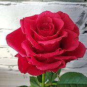 Букеты ручной работы. Ярмарка Мастеров - ручная работа Букеты:Красные Розы из полимерной глины (холодного фарфора). Handmade.
