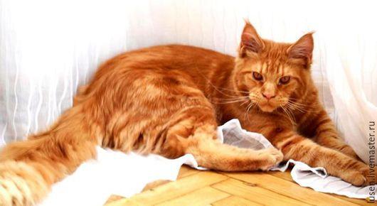 """Фотокартины ручной работы. Ярмарка Мастеров - ручная работа. Купить Фотокартина """"Рыжий кот"""". Handmade. Рыжий"""