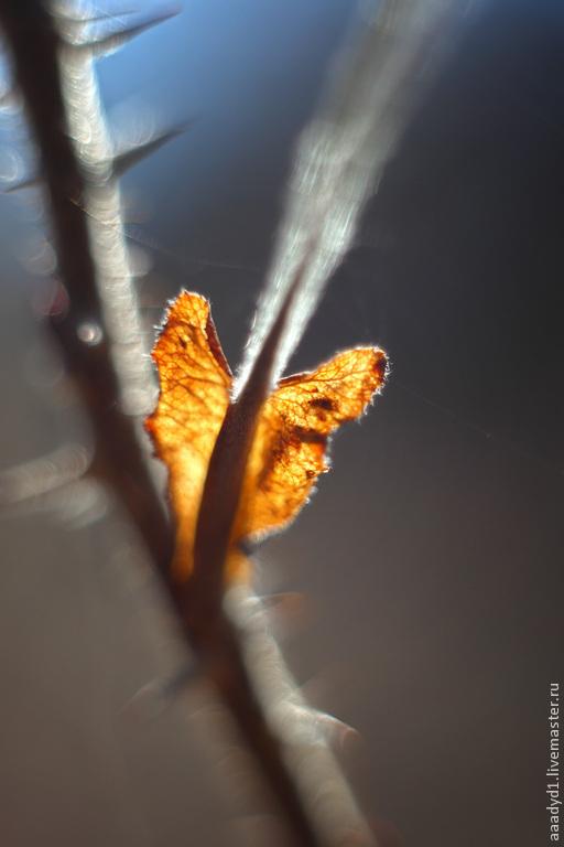 Фотокартина для интерьера,  художественная фотокартина,  свет, солнце, лист шиповника, весна, осень