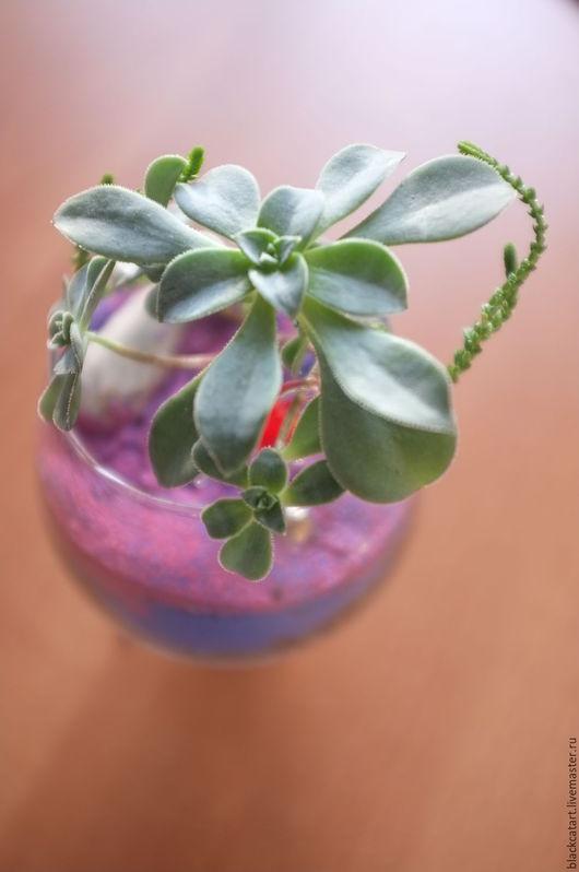 Флорариум `Яркий мир` превносит больше красок жизни в любой интерьер будь то офис, или квартира.