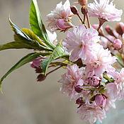 Цветы и флористика handmade. Livemaster - original item Sakura polymer clay.. Handmade.