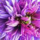 Броши ручной работы. Ярмарка Мастеров - ручная работа. Купить СКИДКА 30% Цветы из ткани Василёк брошь. Handmade. Фиолетовый