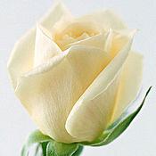 Материалы для творчества ручной работы. Ярмарка Мастеров - ручная работа Набор для средней розы с силиконовыми вайнерами, Н-15. Handmade.