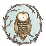 little-owlet