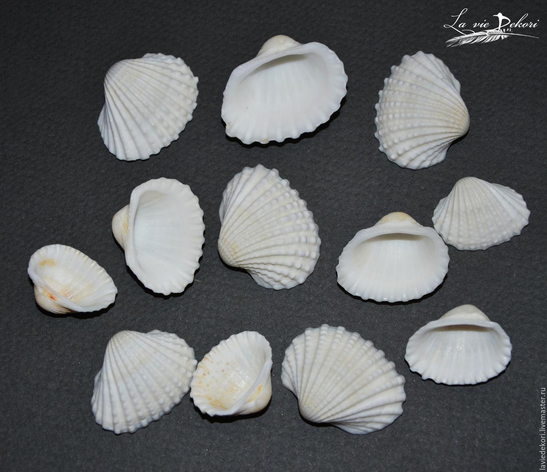 Shells 'Zaragoza' assorted 10pc, Shells, Moscow,  Фото №1
