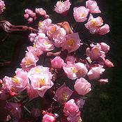 Цветы и флористика ручной работы. Ярмарка Мастеров - ручная работа бонсай Сакура. Handmade.