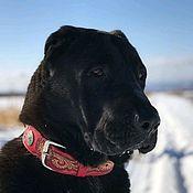 Для домашних животных, handmade. Livemaster - original item The dog collar leather, personalized dog collar, leather collar. Handmade.