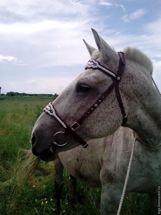 Для других животных, ручной работы. Ярмарка Мастеров - ручная работа. Купить оголовье фигурное для лошади. Handmade. Коричневый