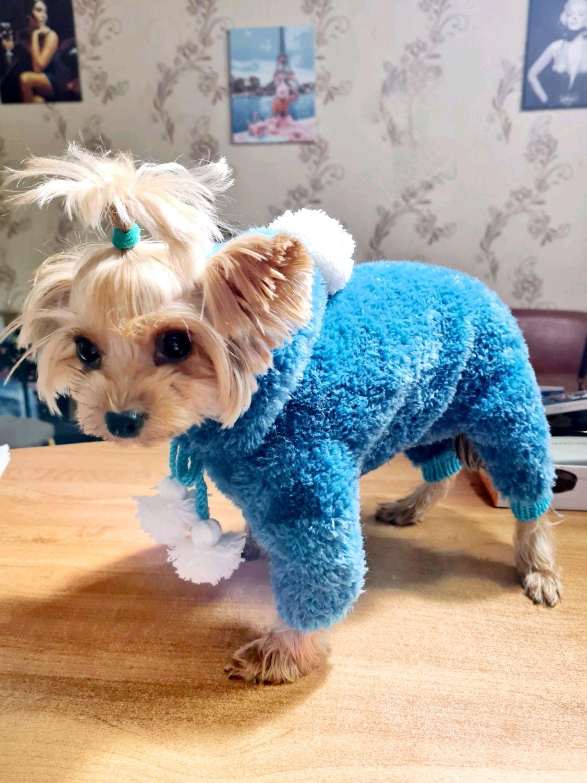 Комбинезон для собаки, Одежда для питомцев, Ейск,  Фото №1