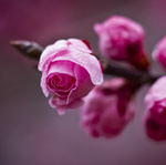 PLUM flowers - Ярмарка Мастеров - ручная работа, handmade