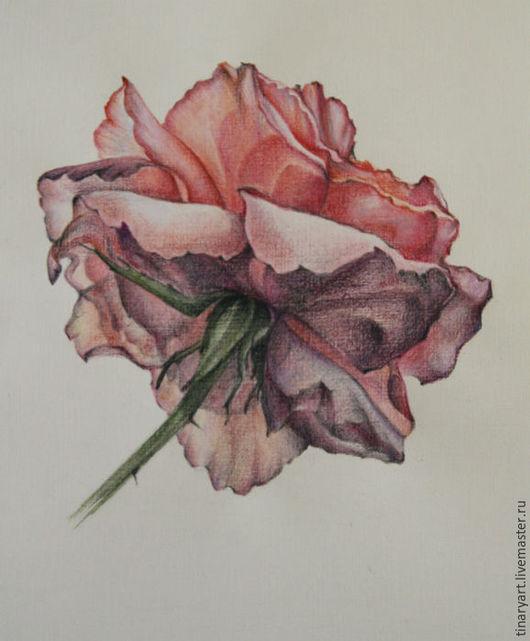 Рисунок розы цветными карандашами на бумаге. Может стать прекрасным украшением интерьера в комнате девушки или женщины.