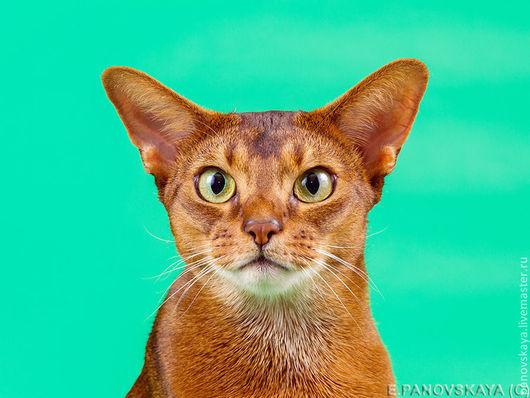 Фото и видео услуги ручной работы. Ярмарка Мастеров - ручная работа. Купить Студийная фотосъемка кошек. Handmade. Фотосессия, кот