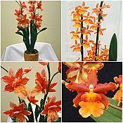 Букеты ручной работы. Ярмарка Мастеров - ручная работа Орхидея камбрия. Handmade.