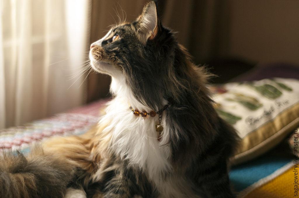 luxury breakaway cat collars
