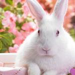 Кроля из страны handmade - Ярмарка Мастеров - ручная работа, handmade