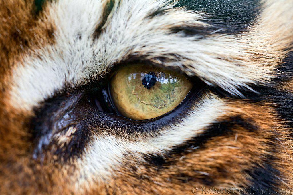 helm tigers eye repeat - 1024×682
