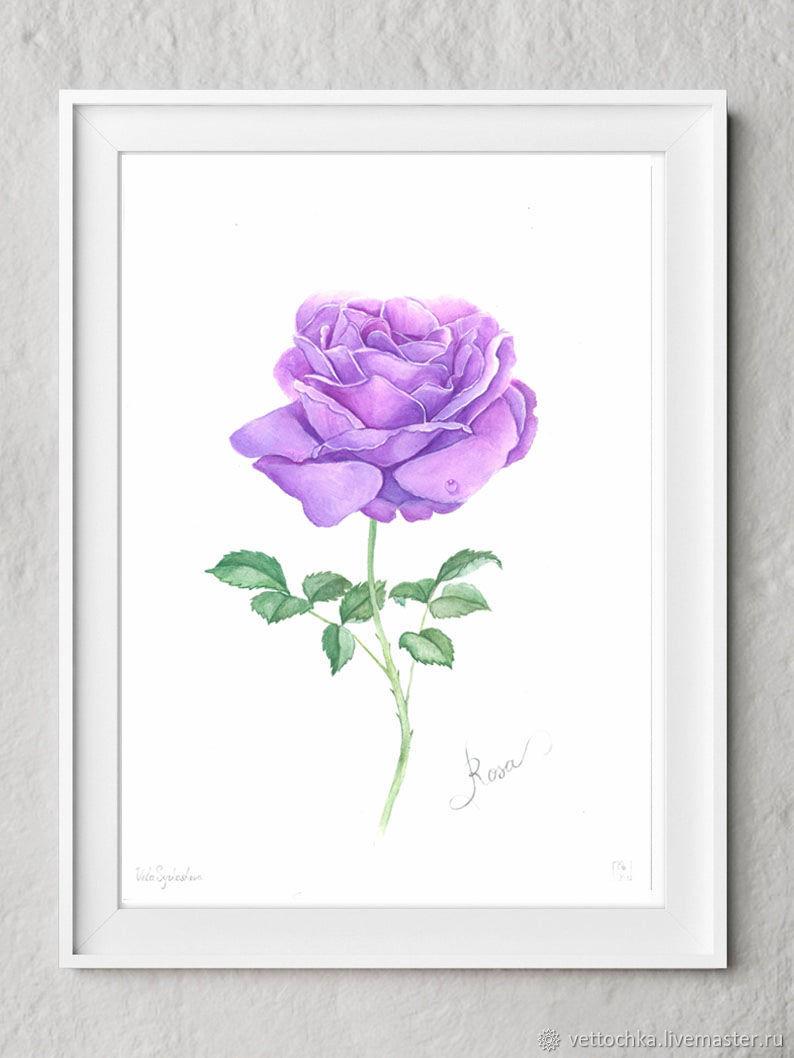 Flower Purple rose watercolor, Pictures, Krasnodar,  Фото №1