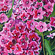 Order  Bright Phlox oil painting, the bright blossoms of Phlox. positive picture Helena Gold. Livemaster. . PicturesФото №3
