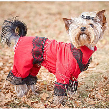 """Для домашних животных, ручной работы. Ярмарка Мастеров - ручная работа Комбинезон для собаки """"Виконт"""". Handmade."""