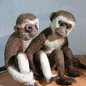 Влюбленная пара-  обезьянки ЛОЛА и ТЬЕРРИ. Уехали в Италию