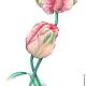 Вместе. Тюльпаны, акварель, размер 21см*35см, бумага Canson 100% хлопок 300 г/м2, Светлана Маркина, LechuzaS