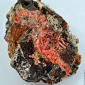 Крокоит кристаллы на лимоните (Тасмания, Дундас)
