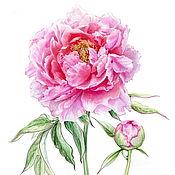 Иллюстрации ручной работы. Ярмарка Мастеров - ручная работа Ботаническая иллюстрация. Handmade.