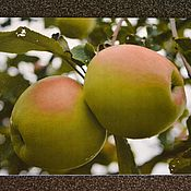 """Открытки ручной работы. Ярмарка Мастеров - ручная работа Открытка """"Яблоневый сад"""". Handmade."""