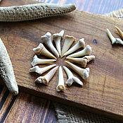 Русский стиль handmade. Livemaster - original item Fossilized shark tooth 15-25 mm. Handmade.
