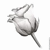 Картины и панно ручной работы. Ярмарка Мастеров - ручная работа Картина Роза, рисунок розы серый белый графика карандаш. Handmade.