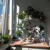 Цветы и флористика handmade. Livemaster - original item Shelf for flowers on the windowsill the Heart, 9 bowls. Handmade.