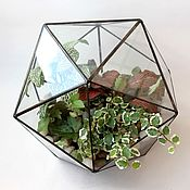 Цветы и флористика handmade. Livemaster - original item The Floriana geometric Icosahedron with fittonia and ficus. mini garden. Handmade.