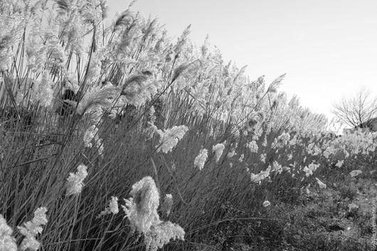 LuStyle. Фоторабота `Солнечный ветер`