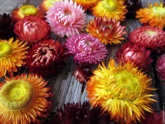 Материалы для флористики ручной работы. Ярмарка Мастеров - ручная работа. Купить Гелихризум, сухоцветы. Handmade. Бордовый, мыло с сухоцветами, для скрапбукинга