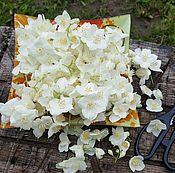 Материалы для творчества ручной работы. Ярмарка Мастеров - ручная работа Жасмин цветы. Handmade.