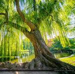 Я Дерево - Ярмарка Мастеров - ручная работа, handmade