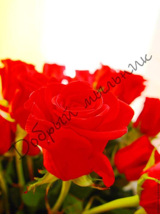 Материалы для косметики ручной работы. Ярмарка Мастеров - ручная работа. Купить Отдушка Свежесрезанные розы для мыла, свечей, бомбочек (США). Handmade.