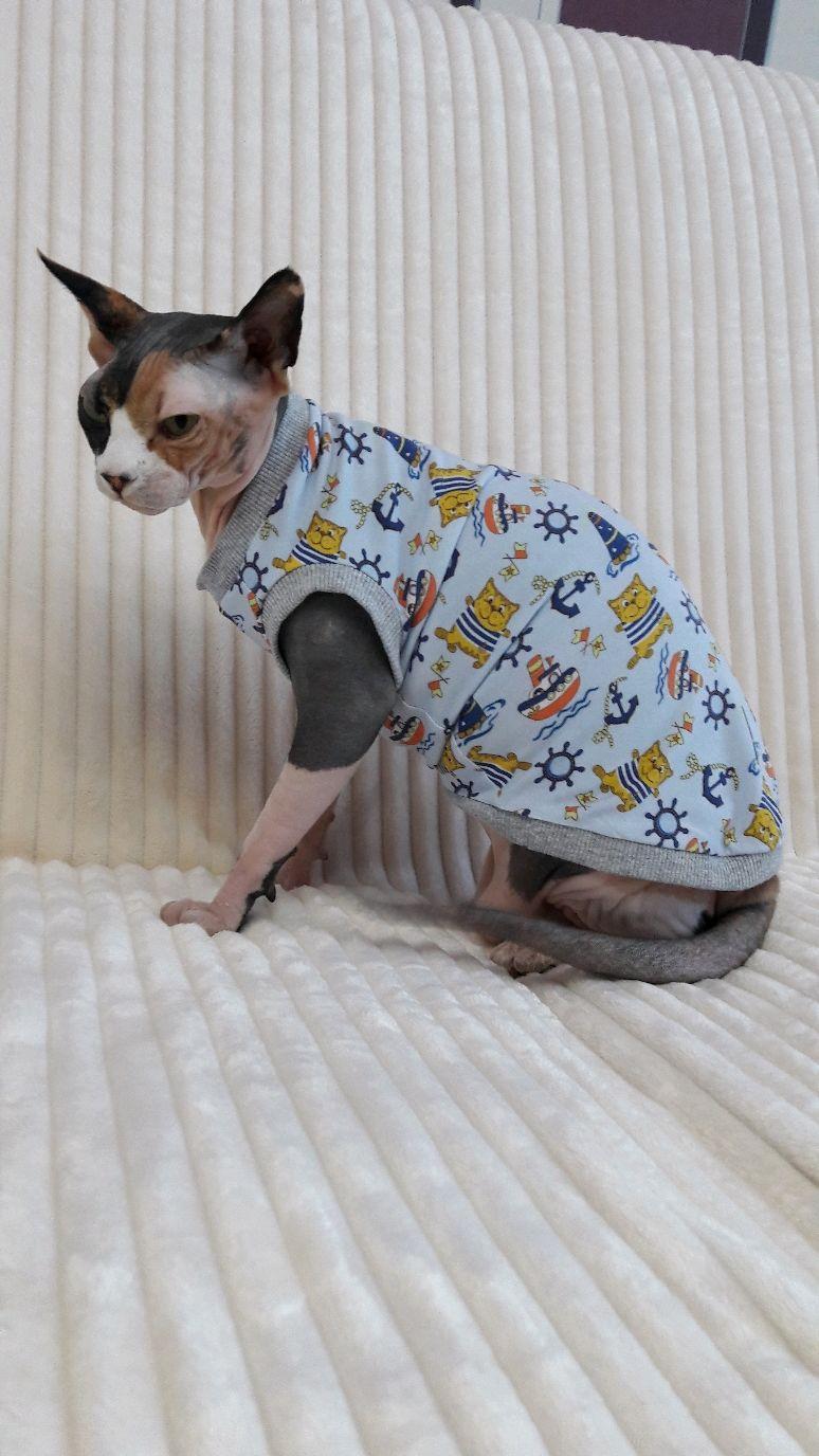 """Одежда для кошек  Майка """"Капитан"""", Одежда для питомцев, Бийск,  Фото №1"""